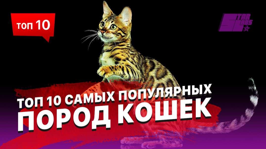 ТОП 10 самых популярных пород кошек! Рейтинг лучших пород!