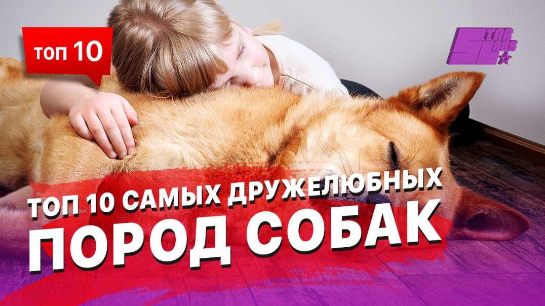 ТОП 10 самых дружелюбных пород собак
