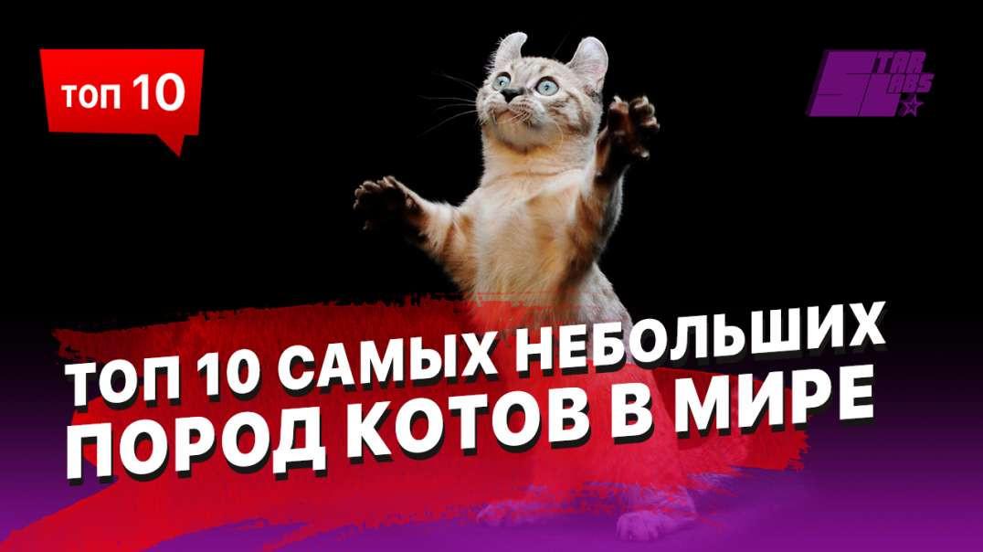 10 самых небольших пород котов в Мире