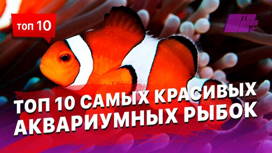Самые красивые рыбы, которых можно содержать в аквариуме