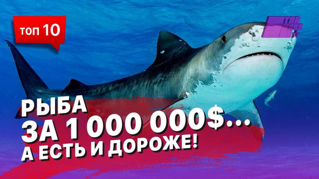 Рыба за миллион долларов... А есть и дороже